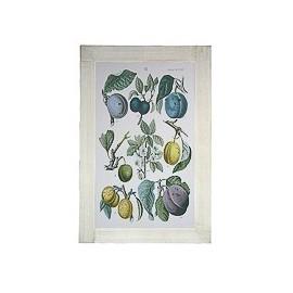Quadro Dipinto Fiori Frutti...