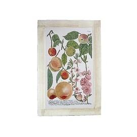 Quadro Dipinto Fiori Frutti 40x60